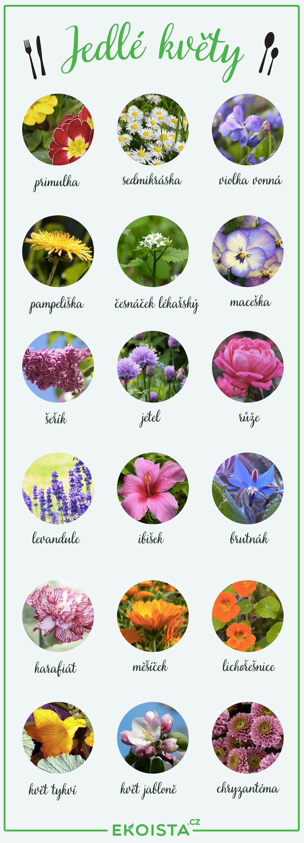 jedle-kvety-infografika