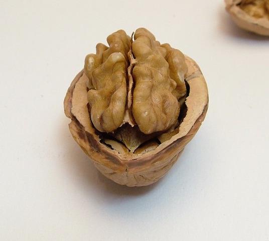 ořechy pro mozek